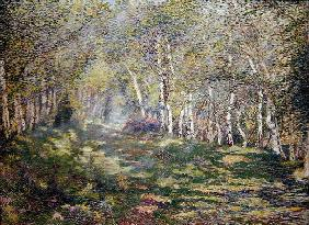 Silver Birches (oil on canvas)