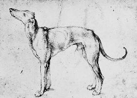 D�rer, Albrecht : A.D�rer, Greyhound / Draw....