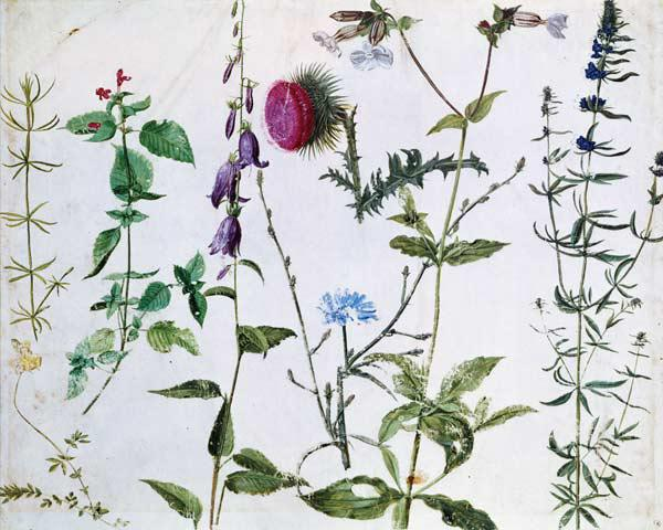 Eight Studies of Wild Flowers