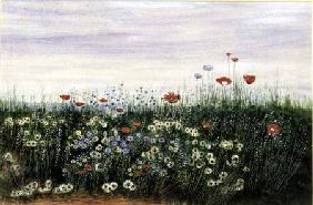 Poppies, Daisies and other Flowers by the Sea