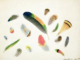 Studies of Feathers