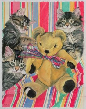 Kittens and teddy