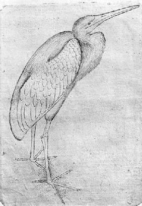 Pelican, from the The Vallardi Album