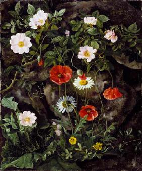 Game roses, poppies and daisy at a stone bank.