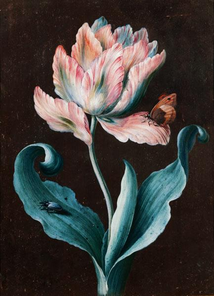 Parrot Tulip with Butterfly and Beetle (gouache)