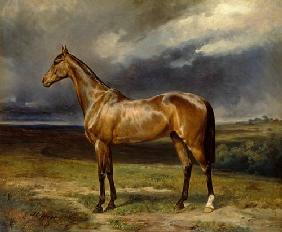 'Abdul Medschid' the chestnut arab horse