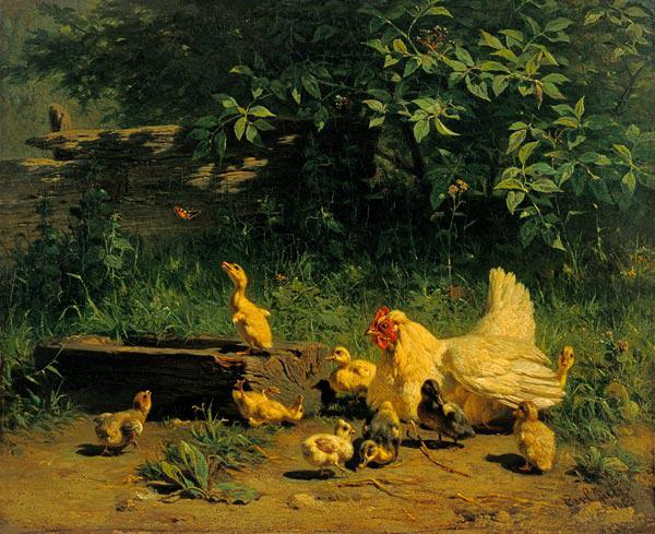 Hen with chicks and young ducks