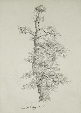 Friedrich, Caspar David : Ancient Oak Tree with a St...