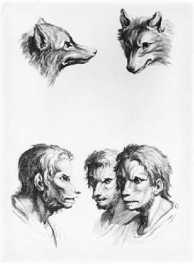 Similarities Between the Head of a Wolf and a Man, from 'Livre de portraiture pour ceux qui commence