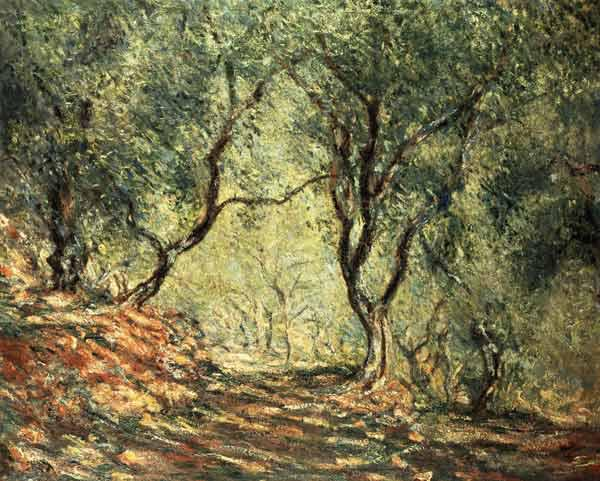 Olive grove in the garden Moreno.