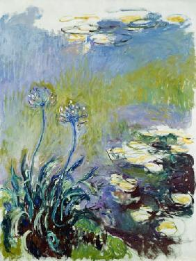 The Agapanthus