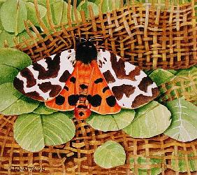 Tiger Moth, 1999 (acrylic on paper)