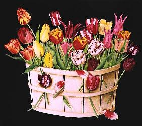 Tulips in an Orchard Basket on Black, 1991 (acrylic)