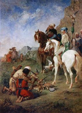Falcon hunting in Algeria