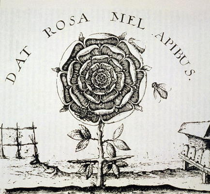 http://www.myartprints.com/kunst/french_school_16th_century_after/rosicrucian_allegory_copy_of_a_hi.jpg