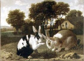 Two Rabbits in a Landscape