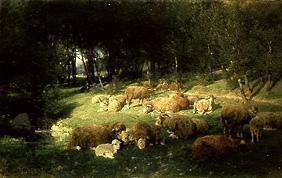 Sheep in the alder grove