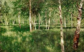 Lewitan, Isaak Iljitsch : Birch Copse