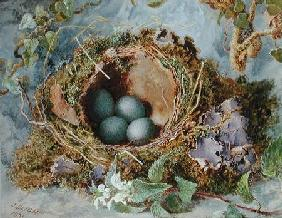 A Nest of Eggs