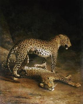 Two Leopards Lying In The Exeter Exchange