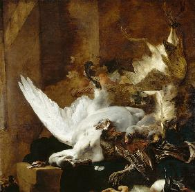 Still life with a dead swan