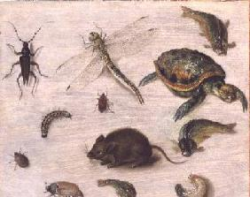 A Study of Insects, Sea Creatures and a Mouse