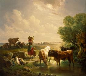 Shepherd family with cows at the watering-place