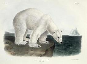 Ursus Maritimus (Polar Bear), plate 91 from 'Quadrupeds of North America', engraved by John T. Bowen