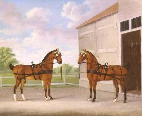 A Pair of Bay Carriage Horses in a Stable Yard