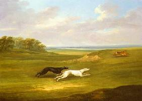 Running, a Coursing Scene