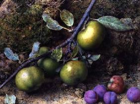 Apples and Plums on a Mossy Bank