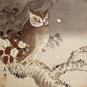 An owl on a tree branch, (colour woodblock print)