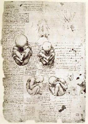 Five Views of a Foetus in the Womb, facsimile copy  &