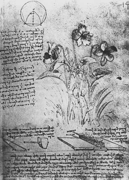 Studies of Violas (Viola odorata and Viola canina), fol. 14r from Manuscript B, c.1487-90 (pen and i