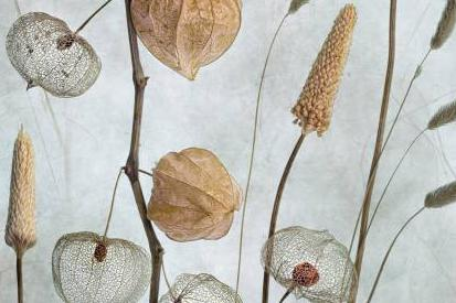 Mandy Disher
