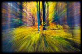 Blurred forest 4