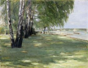 the artists' garden at Wannsee: birches on the lakefront 1918
