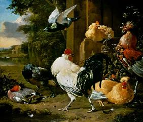 Pigeon and poultry in a garden