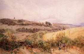 Summer Landscape near Haslemere, Surrey
