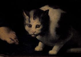 Giulio Romano / Cat / Painting
