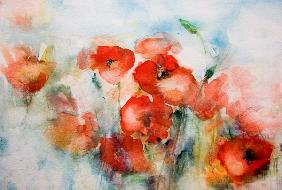 Corn poppy watercolor