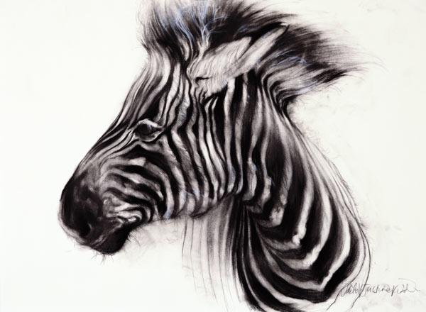Baby Zebra, 2000 (charcoal on paper)