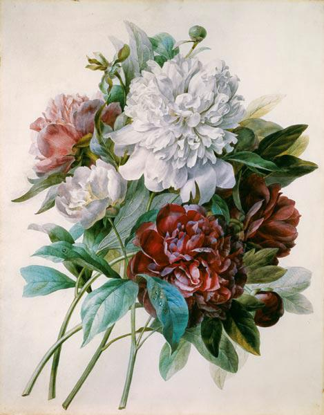 Strauss of red, purple and white peonies