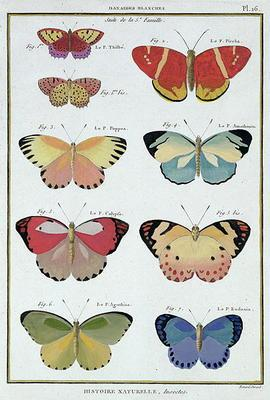 Butterflies from 'Histoire Naturelle des Insectes' by M. Olivier (coloured engraving)