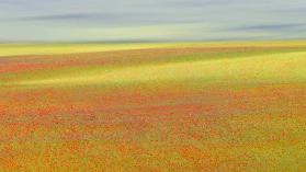 Castelluccio Colors