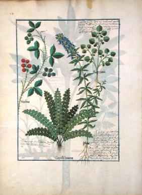 Ms Fr. Fv VI #1 fol.158v Ferns, Brambles and Flowers
