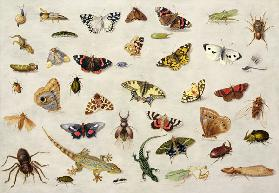 A Study of insects