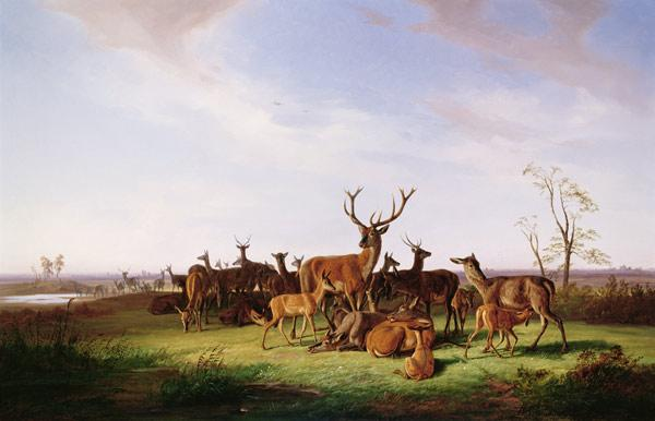 A Herd of Deer in a Sunlit Pasture