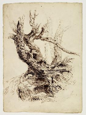 Gnarled Tree Trunk