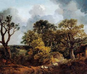Woodland landscape with way and sheep